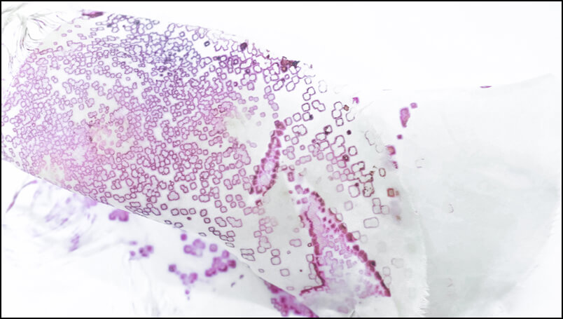 Bacteria On Silk   Samples_0095