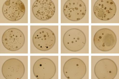 dirt_bacteria