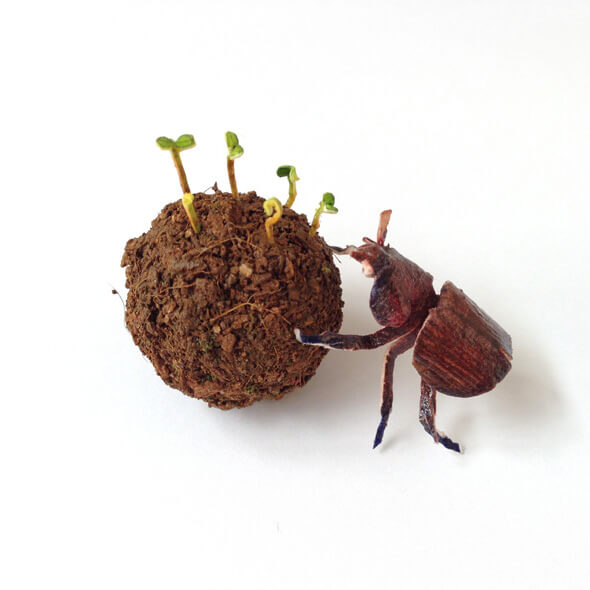 nguyen_dung_beetle_dung_seed_bomb_14178 copia