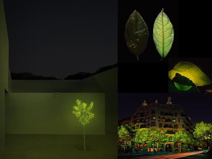 Photo 1 biolumin lemon trees copia copia