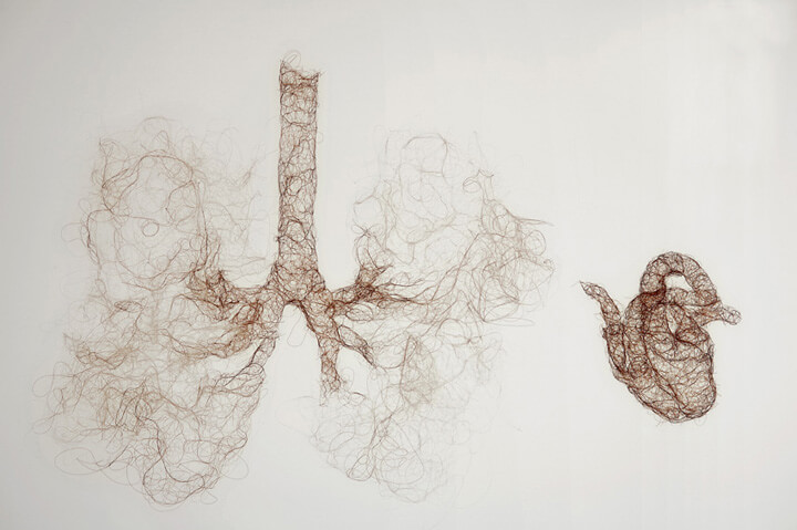 H Pynor_Untitled_Heart Lungs copia
