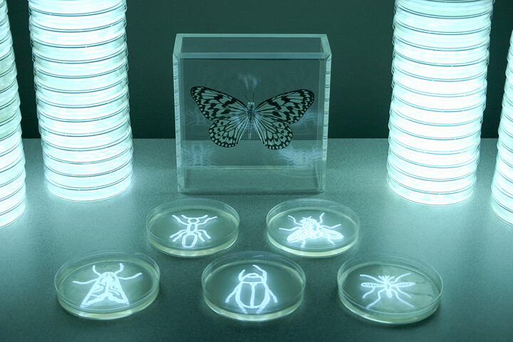 Hunter_Cole_Insecta_2010