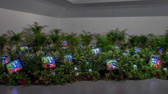 TV-Garden-1974-1977-installation-view