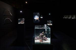 installation-view-of-Asian-Art-Award-2018-photo-Ken-Kato