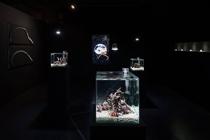 installation-view-of-Asian-Art-Award-2018-photo-Ken-Kato