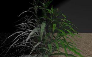 Crossfade-Teosinte-to-Tomorrow-Jon-Davis_weblow