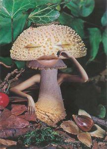 1-Seana-Gavin-Mindful-Mushroom-courtesy-of-the-artist